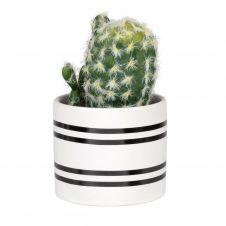 Cactus artificiel pot à rayures