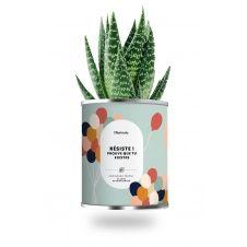 Cactus ou plante pot petit modèle résiste