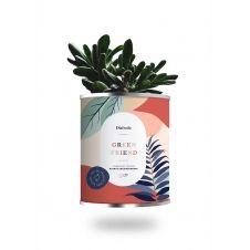 Cactus ou plante pot grand modèle green friend