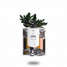 Cactus ou plante pot grand modèle folie douce