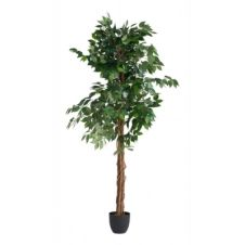 Plante artificielle H180 cm FICUS Noir / Vert