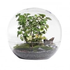 Terrarium extra large forest moon