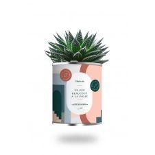Cactus ou plante pot petit modèle à la folie