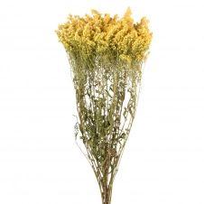 Bouquet de lona séché