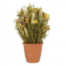 Composition fleurs séchées mysothis pot terracota H34cm