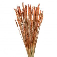 Bouquet de blé triticum orange séché