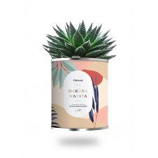 Cactus ou plante pot petit modèle Hakuna Matata