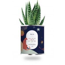 Cactus ou plante pot grand modèle jusqu'au bout du monde