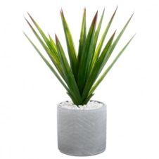 Aloe vera H. 48 cm ALINE Vert