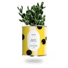 Cactus ou plante pot grand modèle keep smile