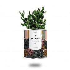 Cactus ou plante pot petit modèle je t'aime