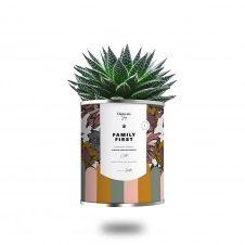 Cactus ou plante pot grand modèle family first