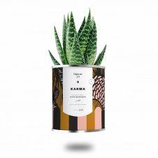 Cactus ou plante pot grand modèle karma