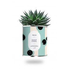 Cactus ou plante pot petit modèle keep cool