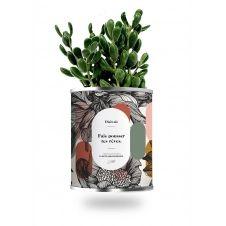 Cactus ou plante pot grand modèle fais pousser tes rêves
