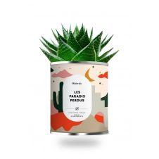 Cactus ou plante pot grand modèle paradis perdus