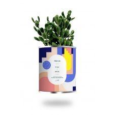 Cactus ou plante pot grand modèle toi + moi